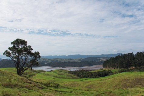1 New Zealand Rolling Hills 4