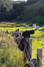 6 New Zealand Sights 2