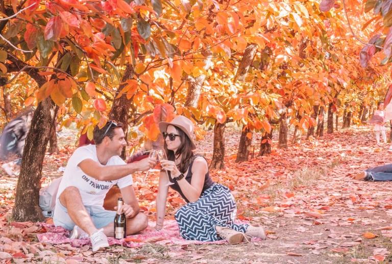 Raeburn Orchard Persimmon Festival