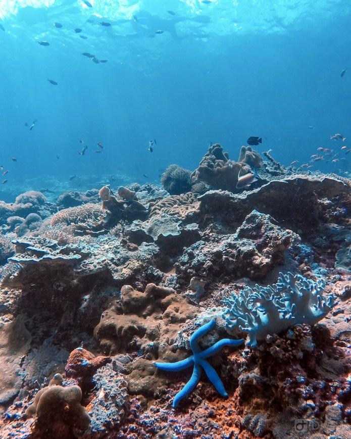 Coral Reef at Toyah Pakeh