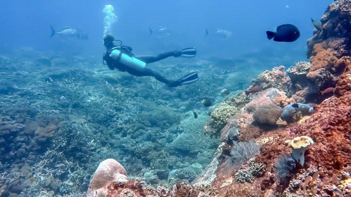 Scuba Diving Nusa Lembongan Bali Indonesia
