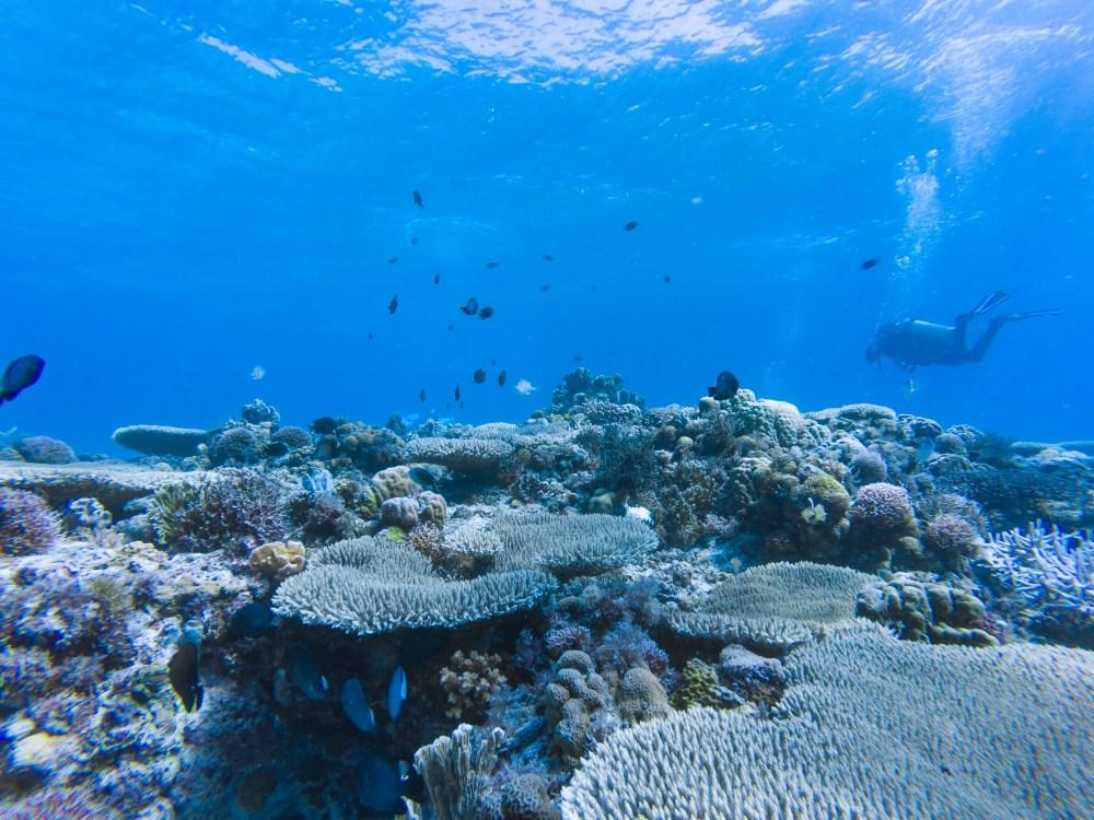 Malapascua Island Cebu Philippines Aquarium Reef