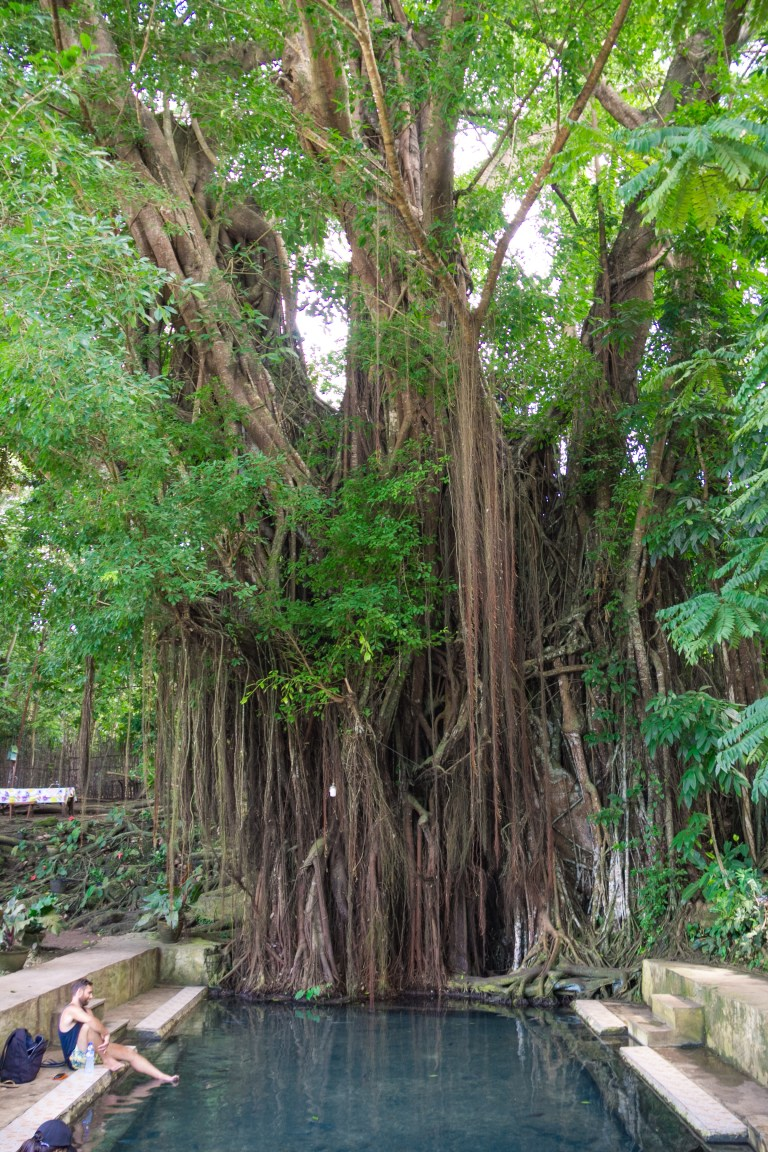 Old Balete Tree Siquijor Philippines