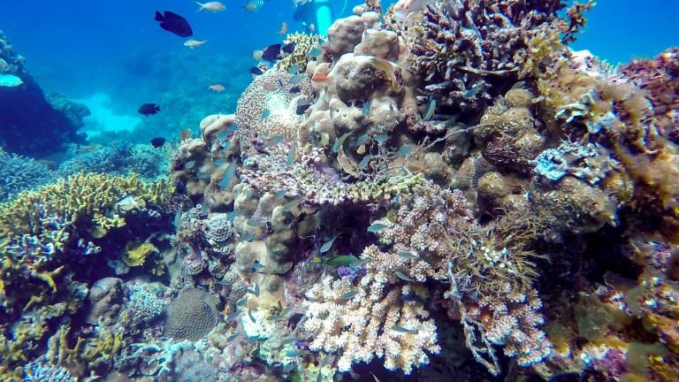 Scuba Diving Siquijor Philippines