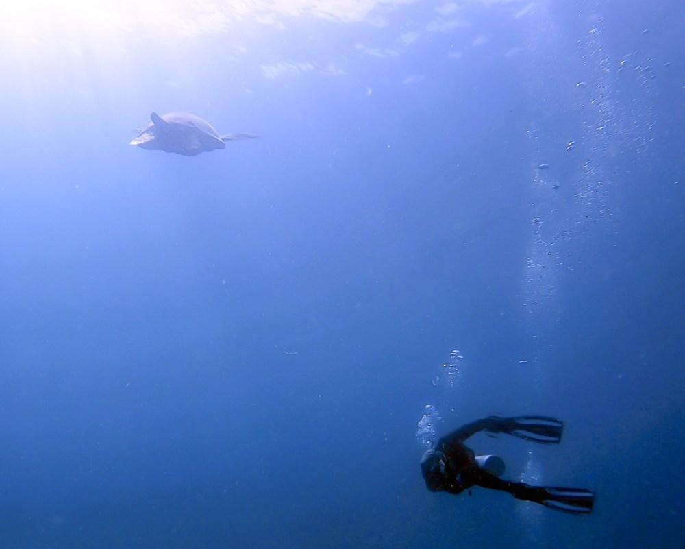 Swim Turtle Scuba Dive El Nido Palawan Philippines