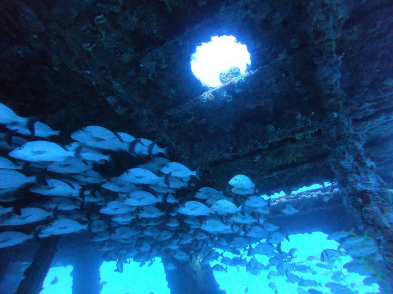 Schooling Fish Scuba Diving Cancun Mexico