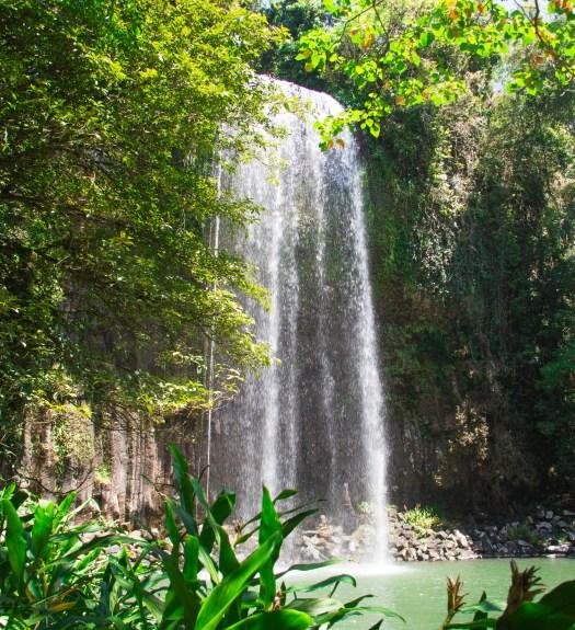 Millaa Millaa Falls Atherton Tablelands Queensland Australia
