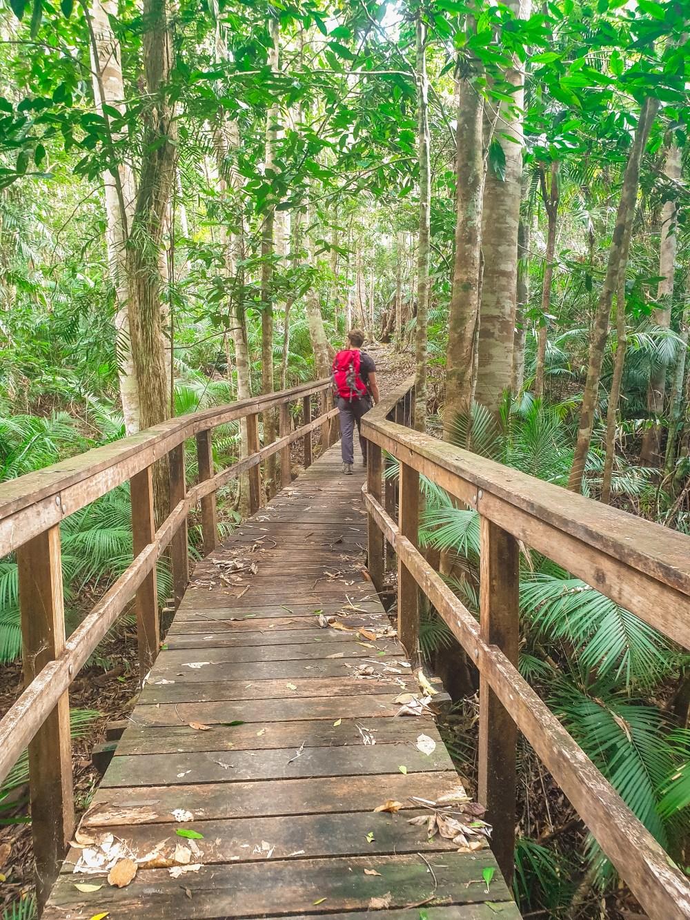 Stoney Creek Boardwalk Cairns Queensland Australia