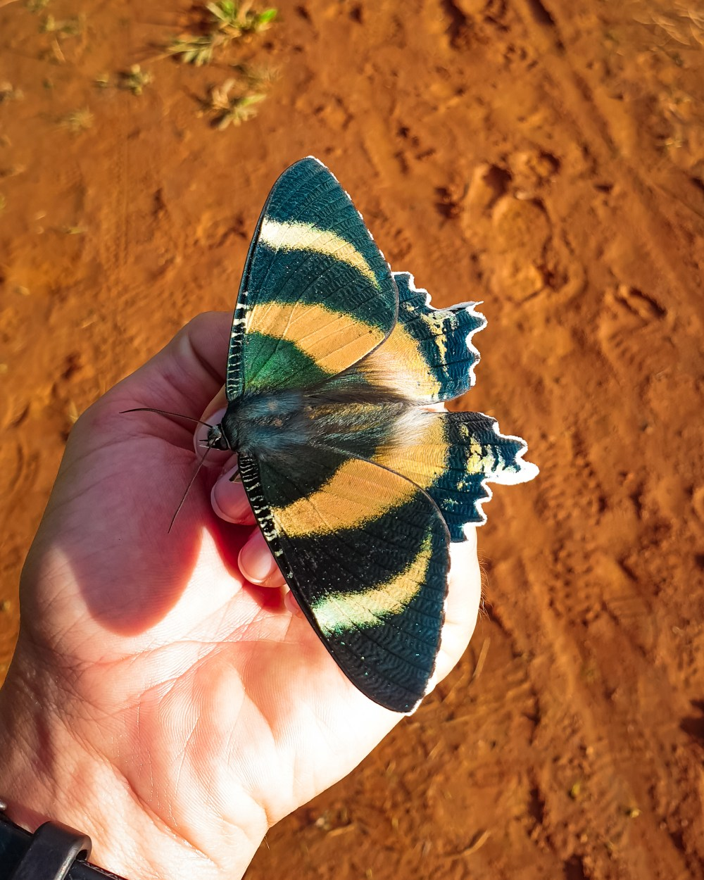 Stoney Creek Butterfly Cairns Queensland Australia
