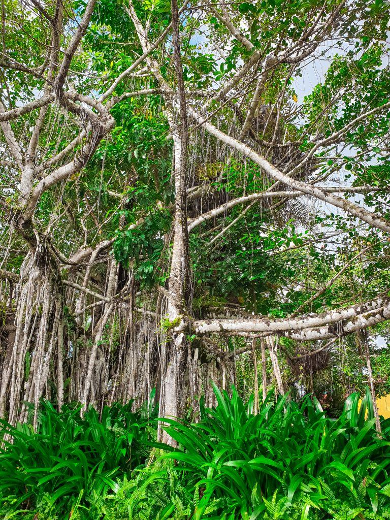 Kuranda Rainforest Cairns Queensland Australia