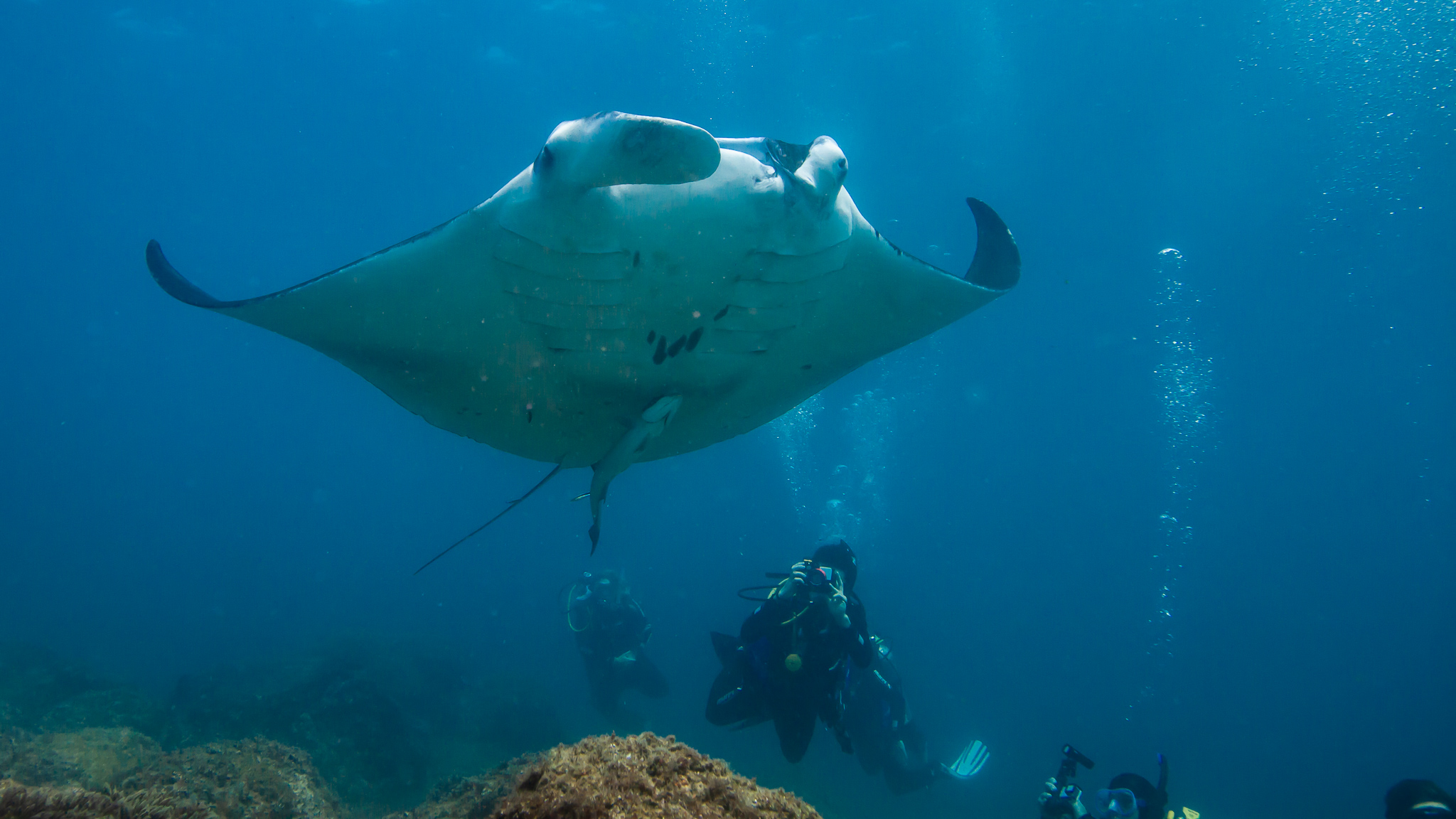 Manta Ray Scuba Diving North Stradbroke Island Queensland Australia