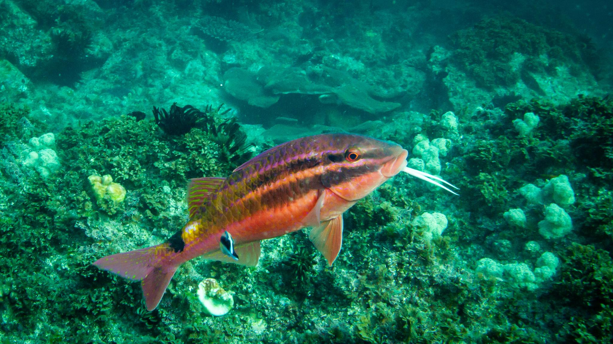 Scuba Diver Julian Rocks NSW Australia