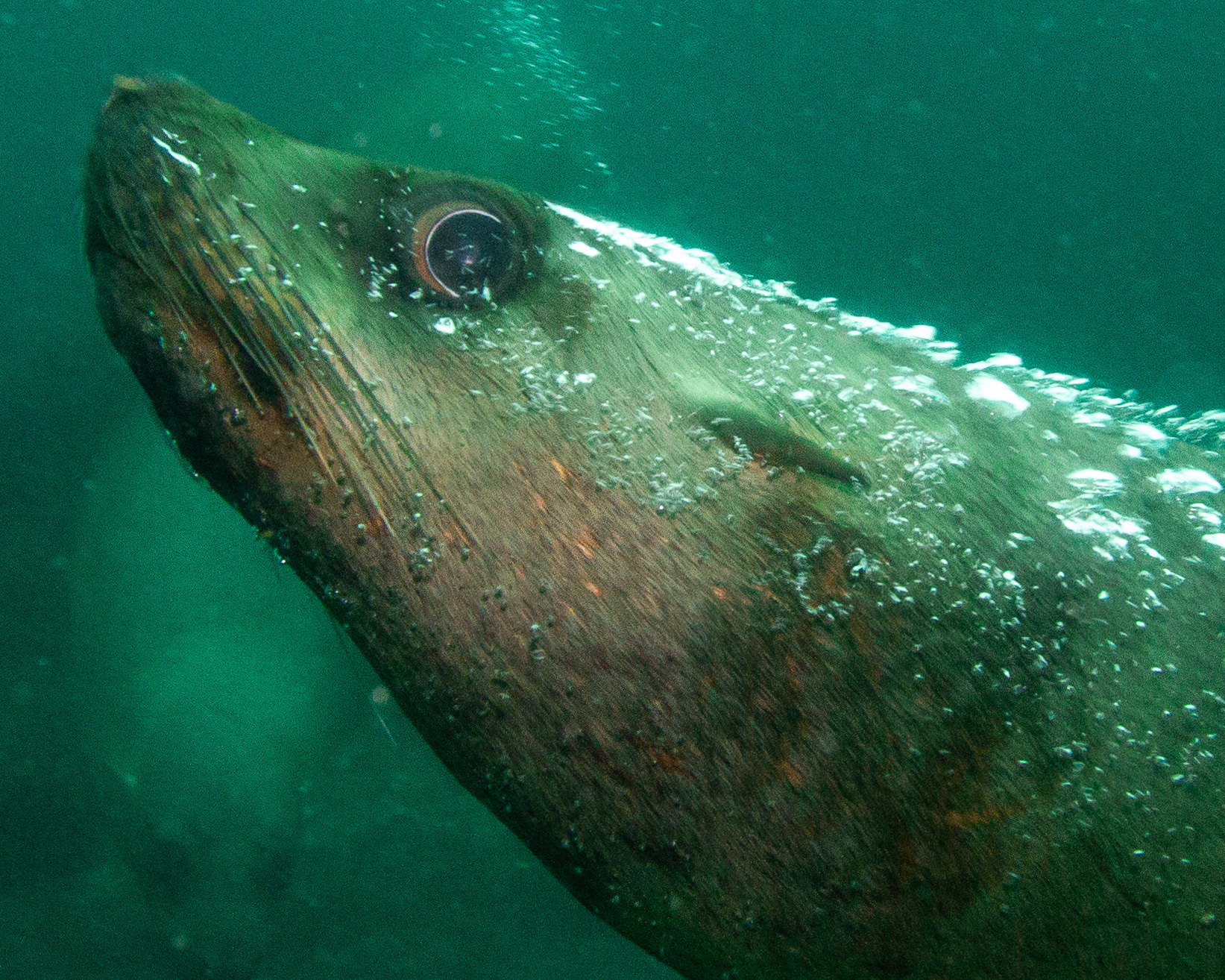 Scuba Jervis Bay NSW Australia
