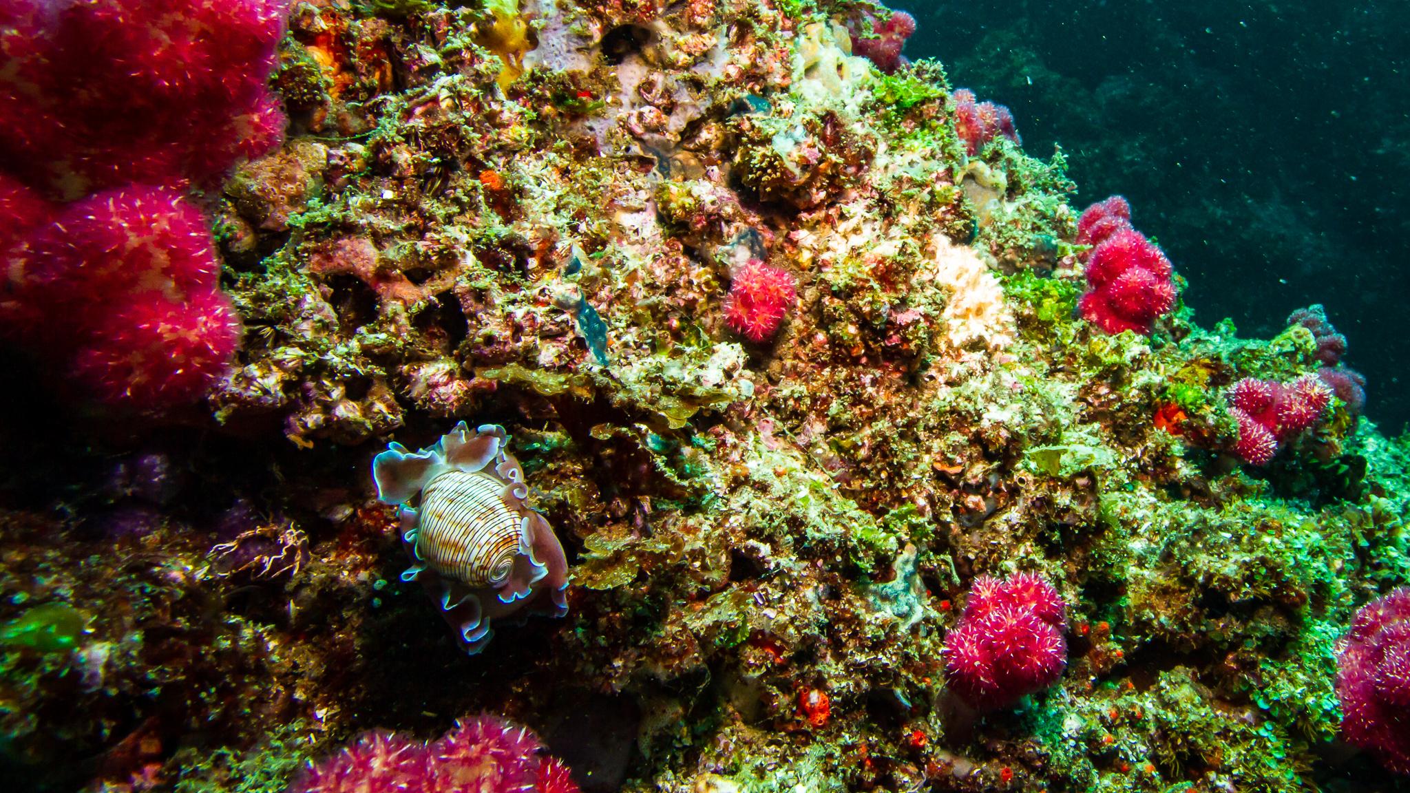 Sea Slug Julian Rocks NSW Australia