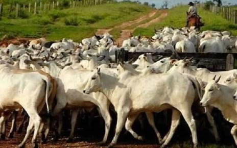 No hay suficiente ganado para cubrir las necesidades población, el excedente de carne ocurre por la poca capacidad de compra de los venezolanos