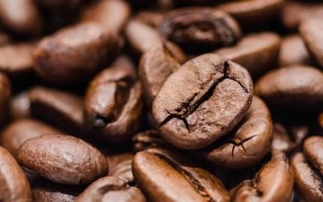 Productores de caf