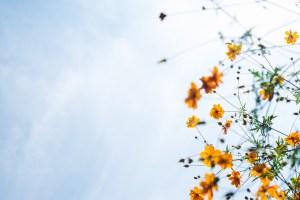 Sine în agonie -poezie terapeutică