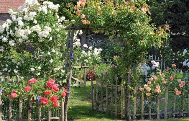 ajoutez des roses a votre haie champetre