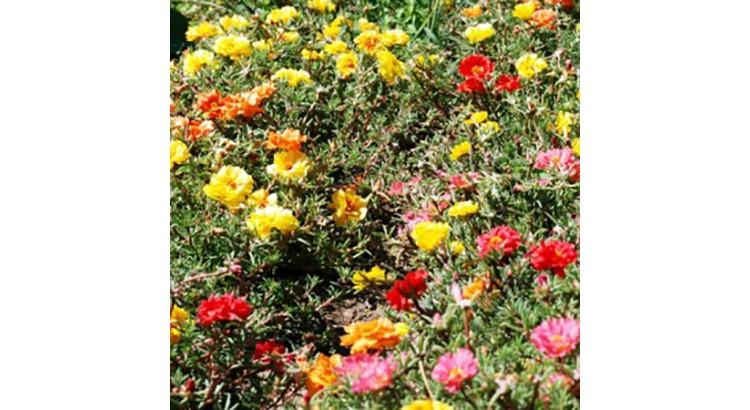 quelles fleurs choisir pour une