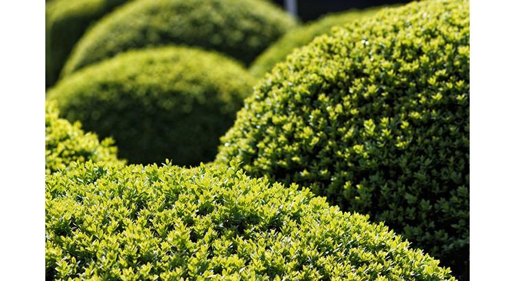 12 plantes du grand froid