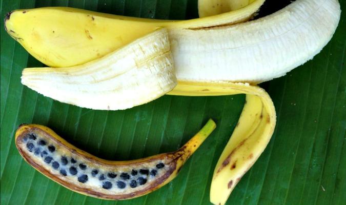 Resultado de imagem para wild banana