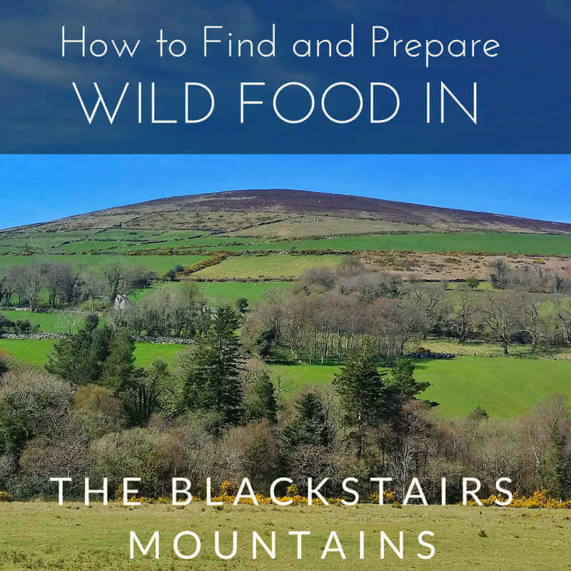 wild-food-blackstair-mountains-ireland