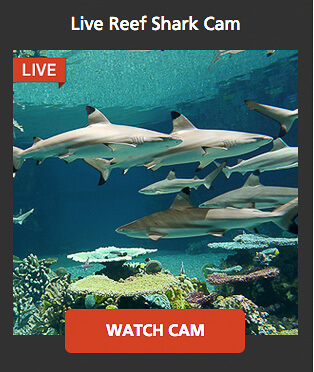 wildlife shark camera