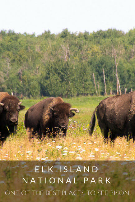rsz_elk_island_national_park_pin