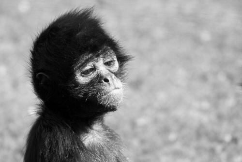 Speaking of Bad Monkeys from a sad monkey Monkeys