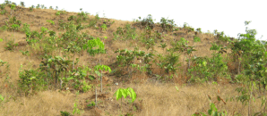 Rubber Field in Mudon Township Mon State