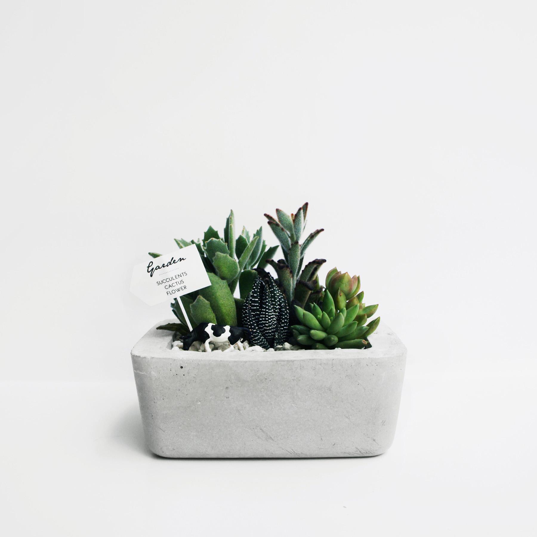 ISLAND 島嶼矩形圓角水泥盆栽・多肉/仙人掌組盆・禮物