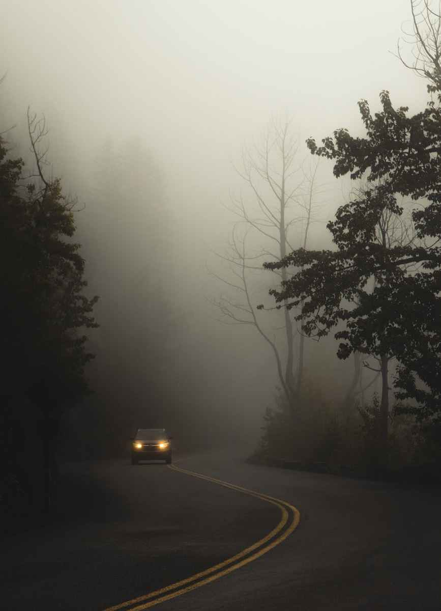 car driving on road between trees against misty sky