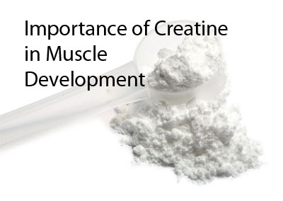 how is creatine stored in the muscle