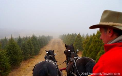 A Foggy Stroll