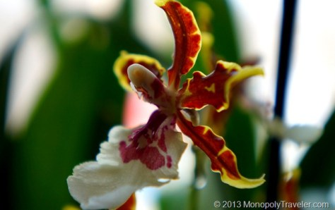 An Orchid Flower