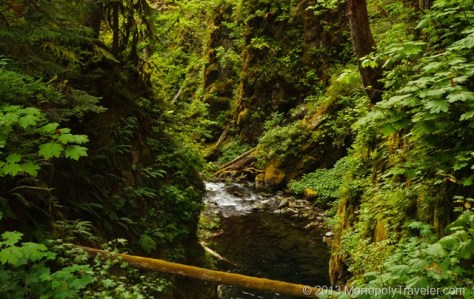 Canyon Carved Out by the Sol Duc River