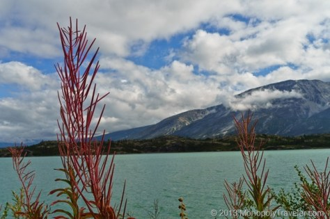 Fireweed by a Higer Elevation Lake