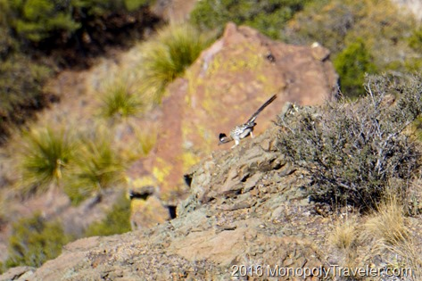 A road runner just before it plunged over the edge