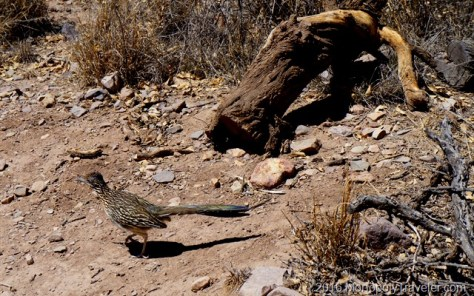 A road runner encounter on the trail