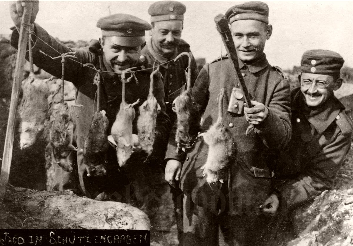 Vintage Trench Rats Killed By Terriers During World War I