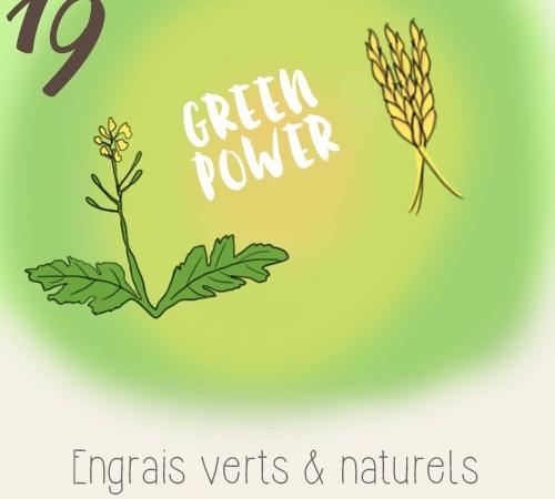 Engrais verts (moutarde, fève et orge) à faire pousser sur un balcon potager
