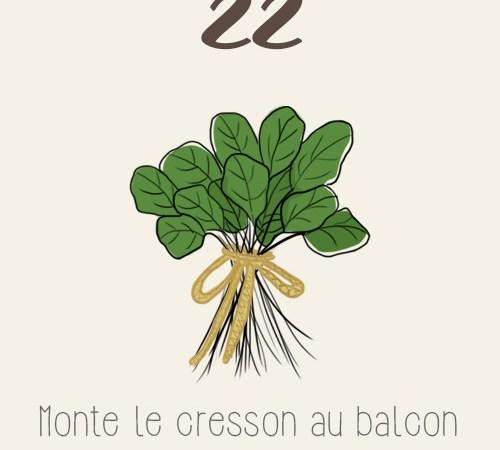Cresson alénois au balcon potager (semis, récolte, recette)
