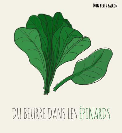 illustration, semis et culture :les épinards géant d'hiver dans un potager sur balcon
