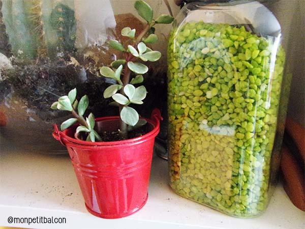 Jour 10 : des plantes succulentes et de la menthe sur une étagère