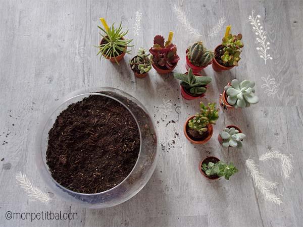 calendrier de l'avent 2015 par mon petit balcon jour 8 - un jardin d'hiver - terrarium et succulentes