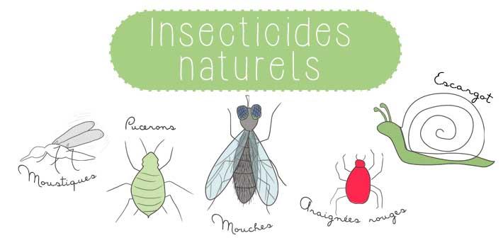 Insecticides naturels à faire soi-même
