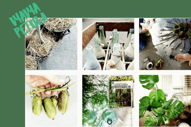 10 comptes Instagram pour voir la vie en vert en 2017 mama petula