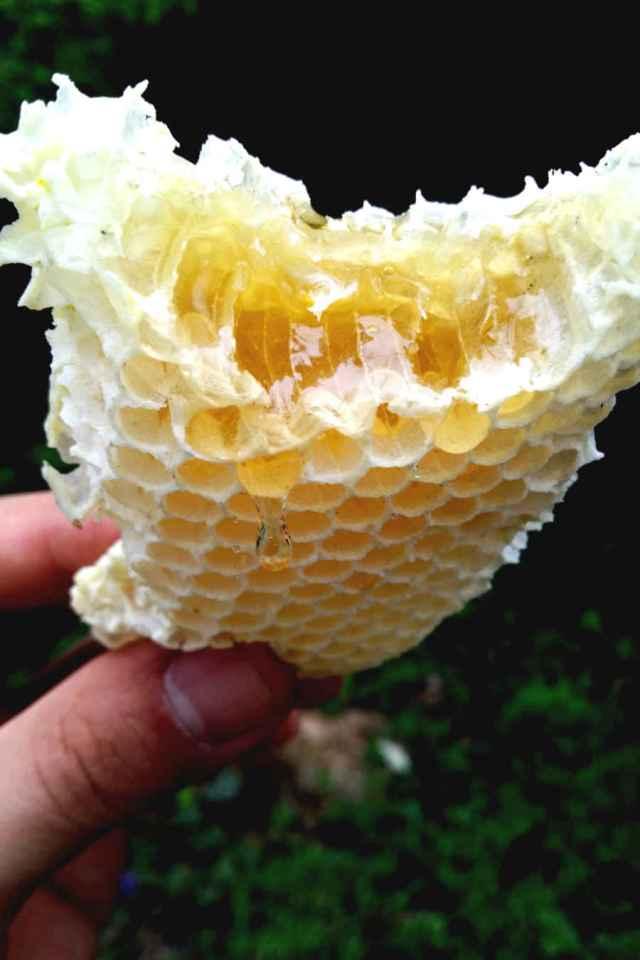 Apiculture urbaine avec CityBzz rayon de miel