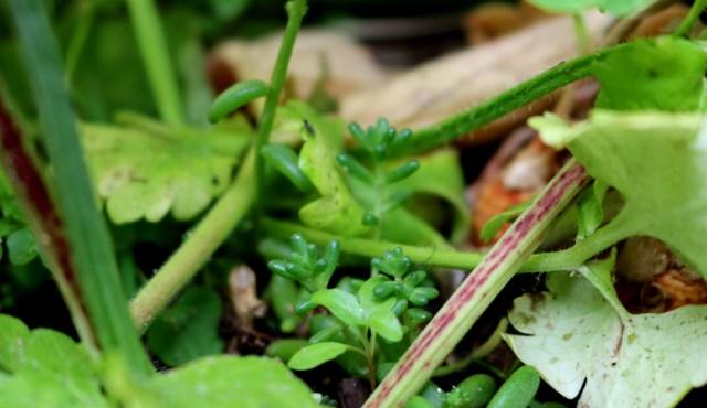 Plantes succulents en pot sur le balcon | Mon petit balcon