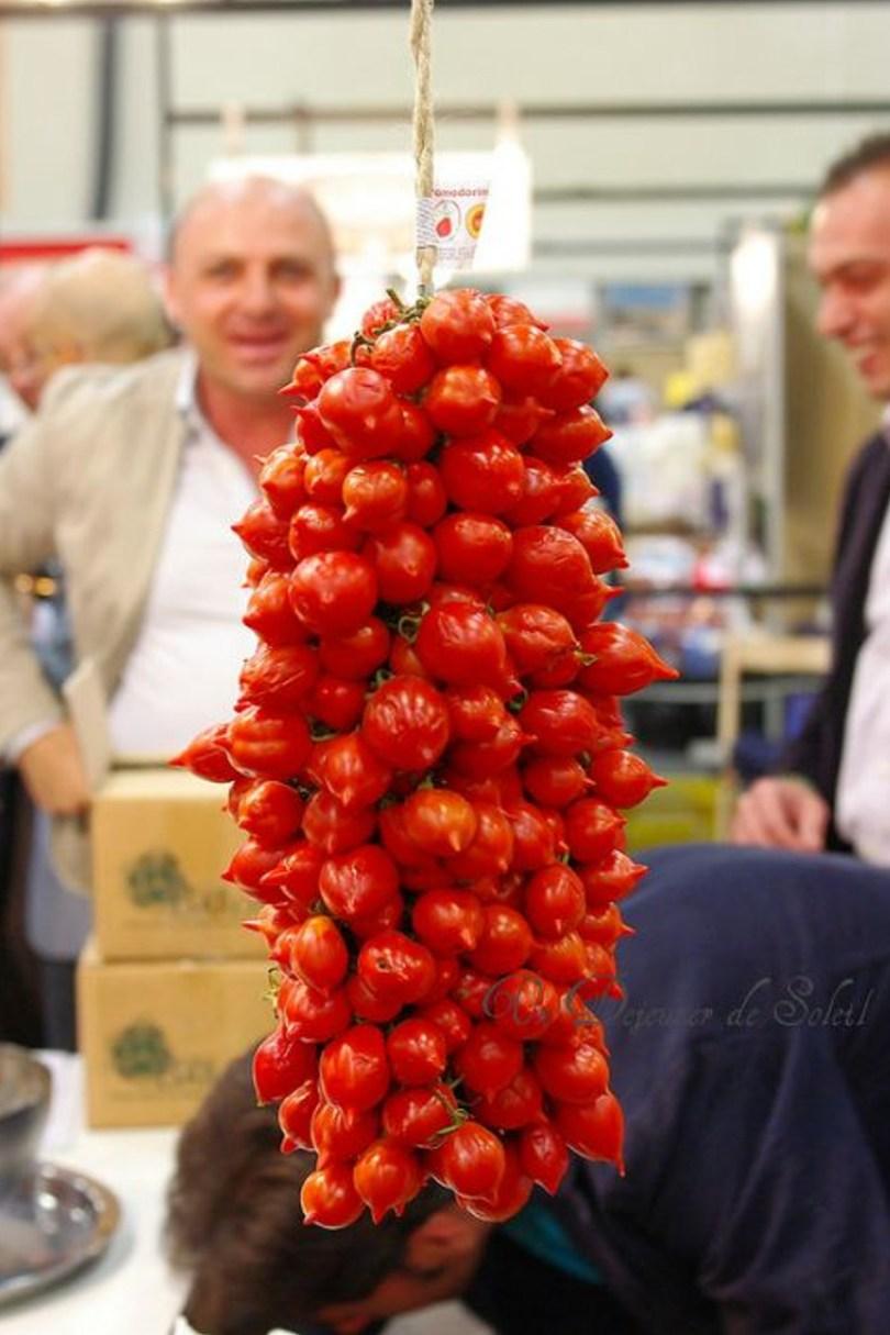 voyage botanique en Italie à la découverte des tomates du Vésuve, une variété de tomate ancienne